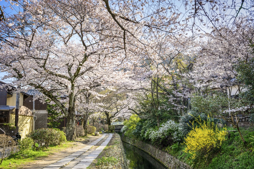 Kyoto, Japan at Philosopher's Walk in the spring season.