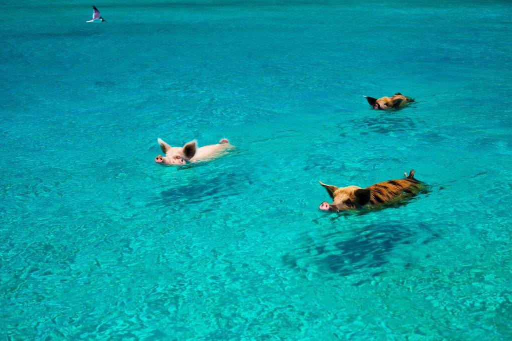 Na ilha de Exuma