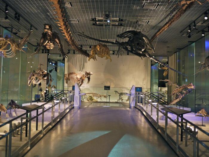 4 Museus de Dinossauros que você não pode deixar de ...
