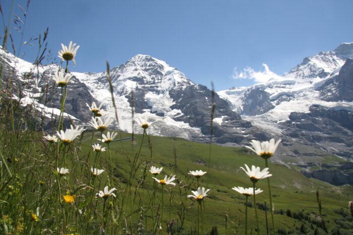 Jungfrau, Monte Eiger