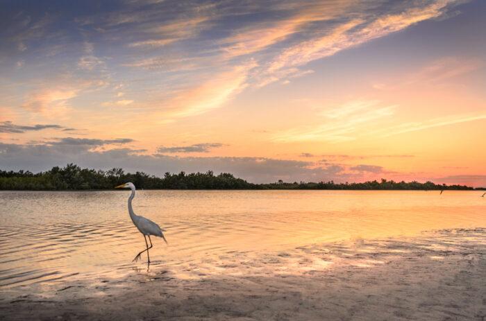 Everglades da Flórida