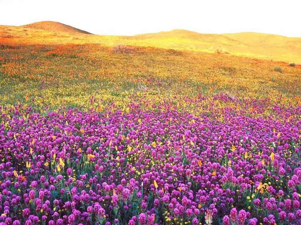 Vale do Parque Nacional das Flores