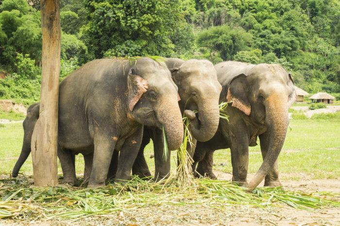 Parque Natural dos Elefantes, Tailândia