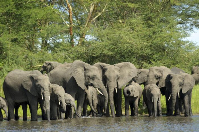 Reserva de Vida Selvagem Nkhotakota, Malawi