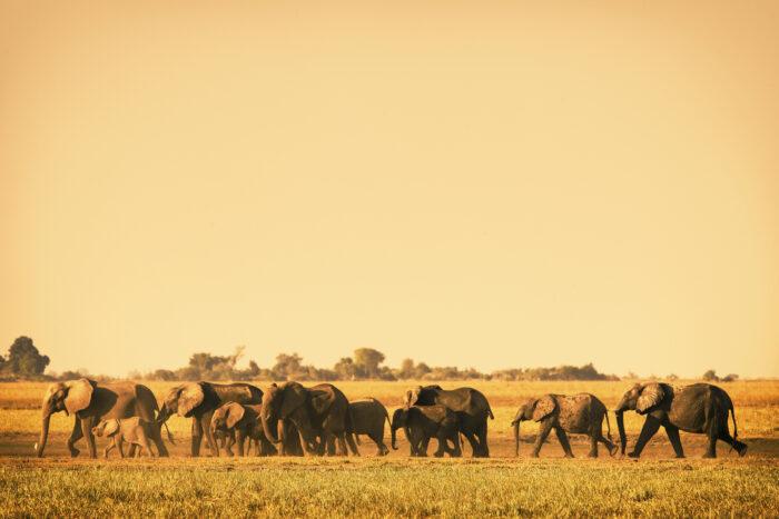 Parque Nacional Chobe, Botsuana