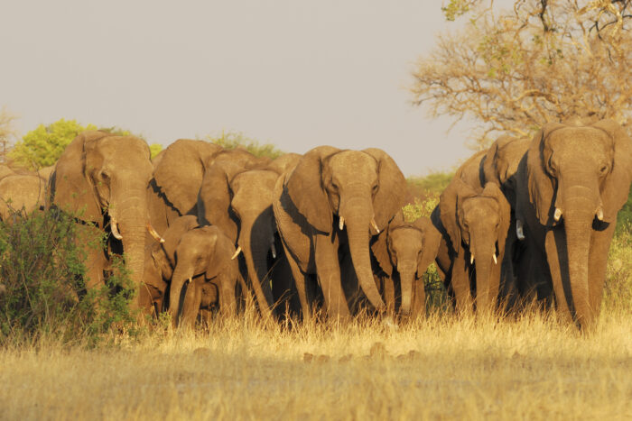 Parque Nacional Hwange, Zimbábue