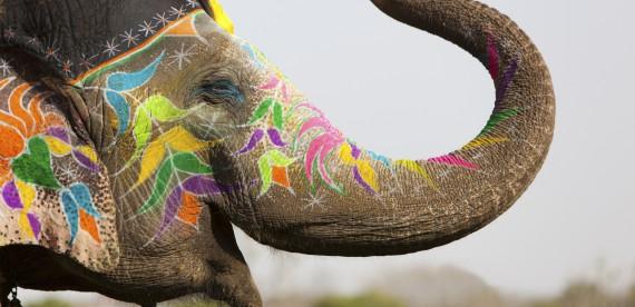 5 lugares incríveis para ver elefantes