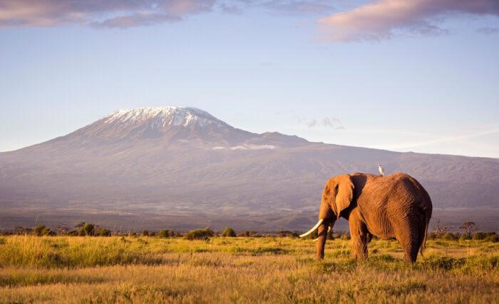 Monte Kilimanjaro, Elefante
