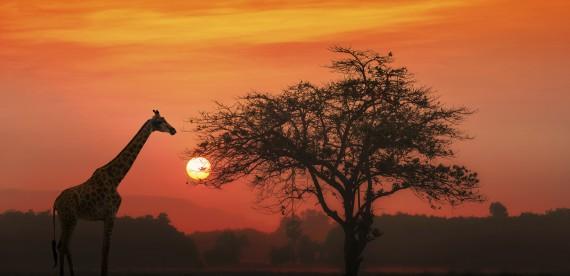 5 coisas que você deve fazer na Tanzânia