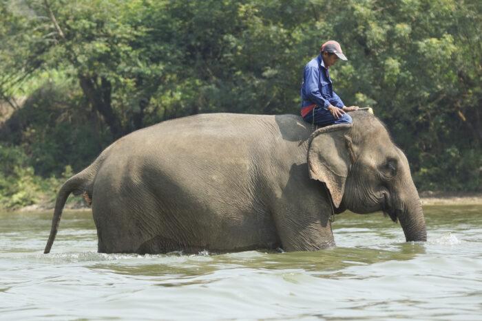 Área de Conservação de Elefantes Sayaboury, Laos