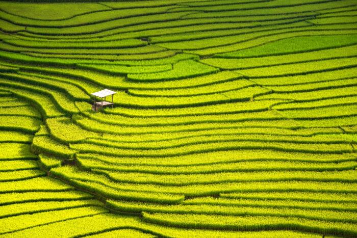 Vista do campo de arroz
