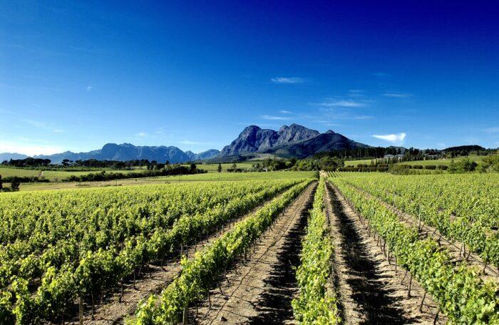 Regiões vinícolas de Paarl, Wellington, Tulbagh, Worcester e Robertson
