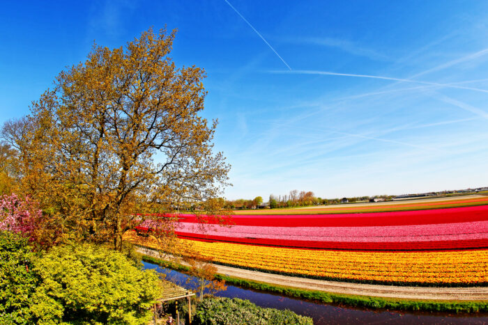 "<img src=""tulipas-na- Keukenhof-Holanda.jpg"