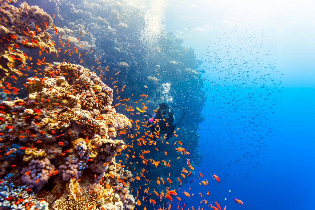 """<img src=""""mergulhe-pelos-corais-australianos.jpg"""