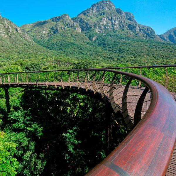 Kirstenbosch, um jardim botânico com mais de 7 mil espécies de plantas